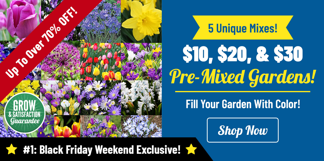 Shop NEW Pre-Mixed Gardens on Sale Now!